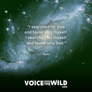 """I searched for God and found only myself. I searched for myself and found only God."" ~ Rumi #god #rumi #voicefromthewild"