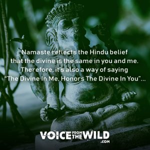 "Namaste reflects the Hindu belief that the divine is the same in you and me. Therefore, it's also a way of saying ""The Divine In Me, Honors The Divine In You""... #namaste #voicefromthewild"