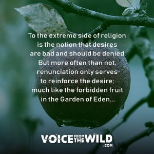 To the You see, to the extreme side of religion is the notion that desires are extreme side of religion is the notion that desires are bad and should be denied. But more often than not, renunciation only serves to reinforce the desire; much like the forbidden fruit in the Garden of Eden... #zen #spirituality #voicefromthewild