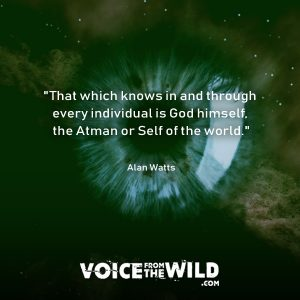 """That which knows in and through every individual is God himself, the Atman or Self of the world."" ~ Alan Watts #god #AlanWatts #voicefromthewild"