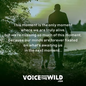 This moment is the only moment where we are truly alive, but we're missing so much of this moment, because our minds are forever fixated on the what's awaiting us in the next moment... #meditation #voicefromthewild