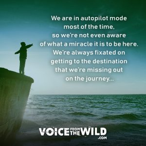 We are in autopilot mode most of the time, so we're not even aware of what a miracle it is to be here. We're always fixated on getting to the destination that we're missing out on the journey... #meditation #mindfulness #voicefromthewild