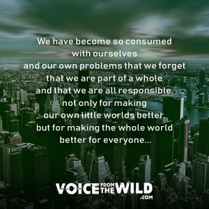 We have become so consumed with ourselves and our own problems that we forget that we are part of a whole and that we are all responsible, not only for making our own little worlds better, but for making the whole world better for everyone... #inspiration #spirituality #voicefromthewild