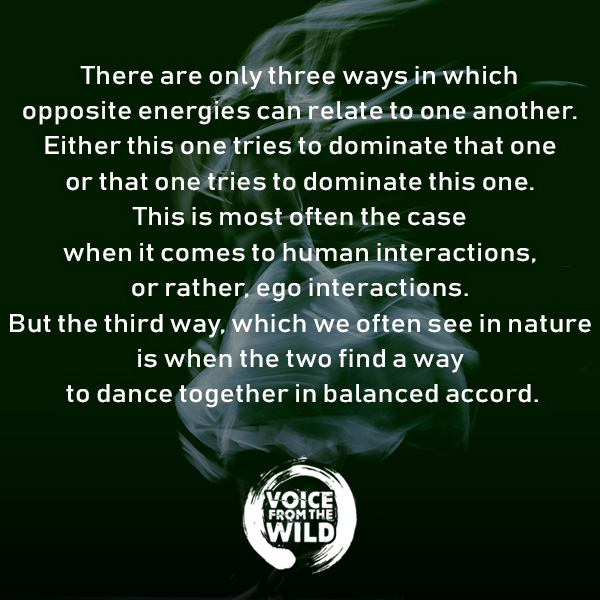 Tthere are only three ways in which opposite energies can relate to one another. Either this one tries to dominate that one or that one tries to dominate this one. This is most often the case when it comes to human interactions, or rather, ego interactions. But the third way, which we often see in nature is when the two find a way to dance together in balanced accord.