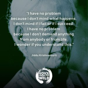 """I have no problem because I don't mind what happens. I don't mind if I fail or if I succeed. I have no problem because I don't demand anything from anybody or from life. I wonder if you understand this."" ~ Jiddu Krishnamurti #JidduKrishnamurti #zen #spirituality #voicefromthewild"
